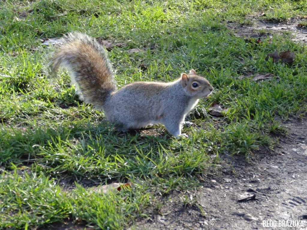 St. James's Park fauna